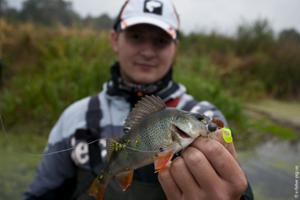 big-bite-baits-fat-grub-2-perch.jpg