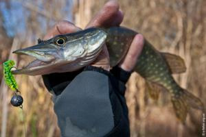 big-bite-baits-fat-grub-2-pike.jpg