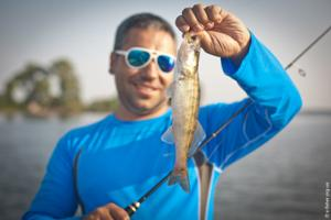 walleye-easy-shiner-3.jpg